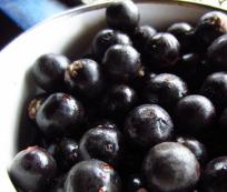 Fruto Acaí Berry: ¿otro super alimento?