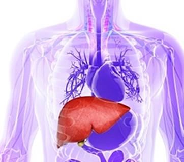 Combatir el hígado graso