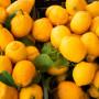 Las cualidades del jugo de limon
